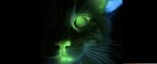 bad science cat 2