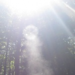 Vortex ring in the woods