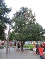 Survivor tree at ground zero