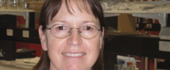 GMO Judy Carman