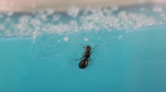 Ant Farm Vlog 1