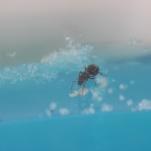 Ant Farm Vlog 2