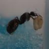 Ant Farm Vlog 5