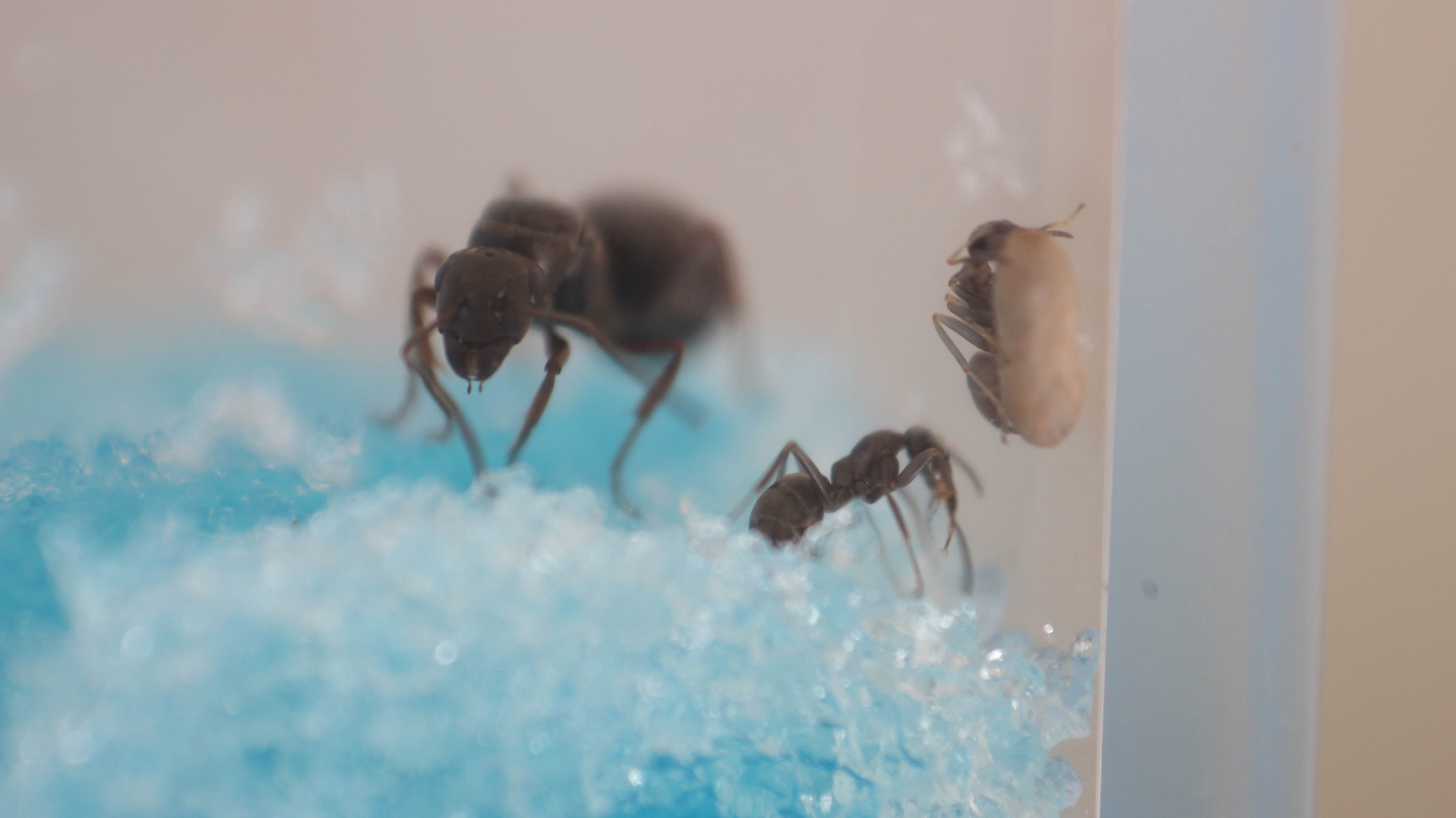 Ant Farm Vlog9