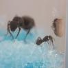 Ant Farm Vlog 9
