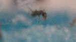 Ant Farm Vlog 10