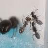 Ant Farm Vlog 12
