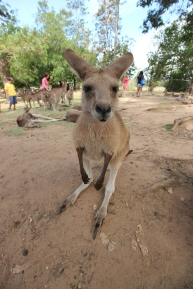 What was that skippy?